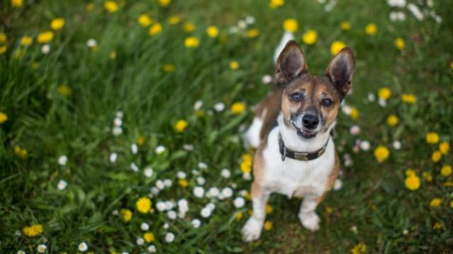 für TdT Listenhunde Theresa Weyer SOKA RUN e V Wetterpark Offenbach Bild x von 22 Offenbach