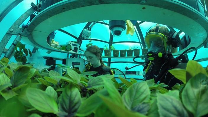 """Modern Farming: In """"Nemo's Garden"""" baut eine italienische Familie unter Wasser Gemüse und Kräuter an."""