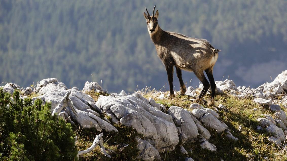 Zweitages-Bergtour im Karwendel - Allein unter Gämsen