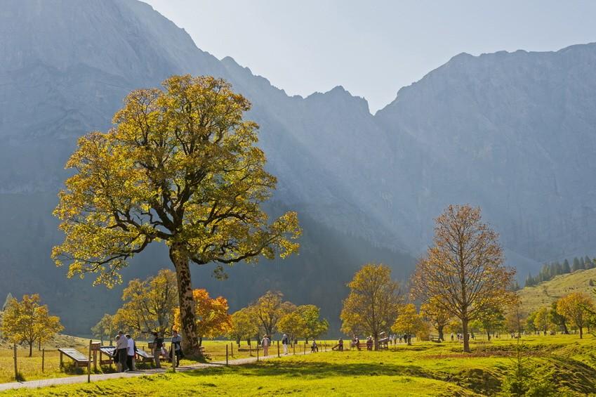 Goldener Herbst im Karwendel; Karwendel Ahornboden Herbst Ahorn Ahornbäume Eng Engalm Almen Wanderung Wandern