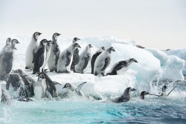 Kinostart - 'Die Reise der Pinguine 2'