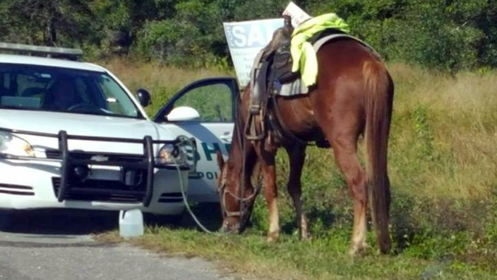 Ab in pferd spritzt frau pferd spritzt