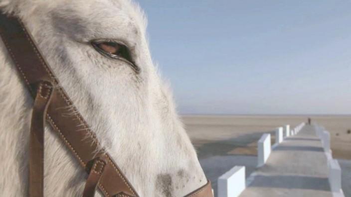20 Jahre Dokumentarfilmreihe: Esel Gorrión muss in Donkeyote mit seinem Besitzer Manolo übers Meer, denn Manolo will Amerika bereisen.