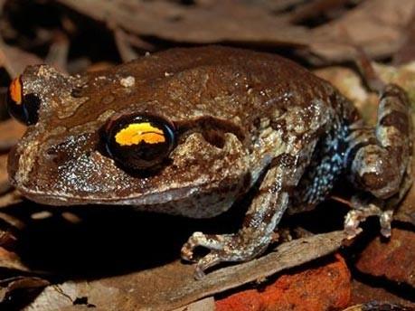 Mekong neu entdeckte Arten WWF