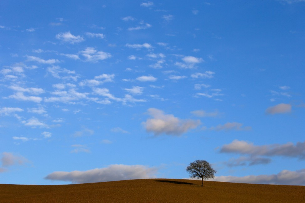 A tree is seen in Val D'Orcia