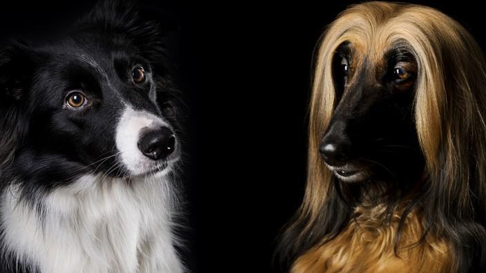 Hunde