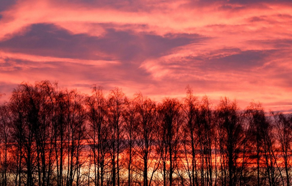 Trees are pictured at sunrise in Tula region