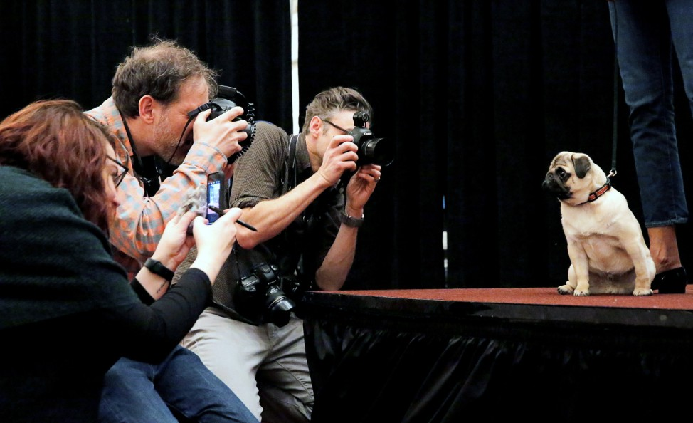 Photographers take photos of Sid the Pug at a media preview event for the Westminster Kennel Club Dog Show in Manhattan, New York