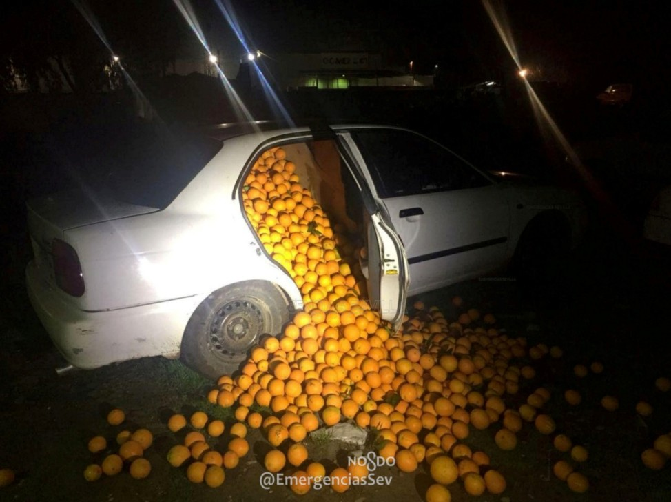 Stolen oranges are seen in Carmona, Seville