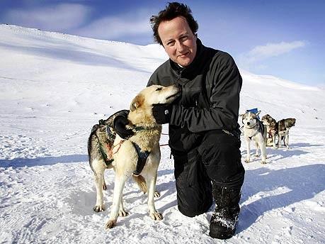 David Cameron Wahl Großbritannien Tory Torys