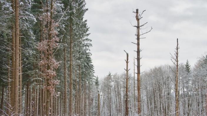 Magic Forest 5