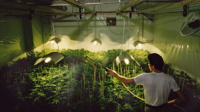 Niederlande: In Amsterdamer Coffee-Shops darf man Cannabis rauchen. Doch der Anbau von Hanf ist in den Niederlanden genauso verboten wie in Deutschland.