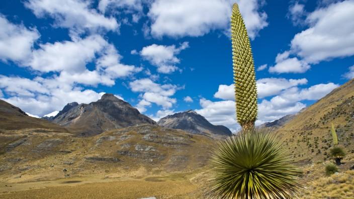 Anden In Peru Berge In Denen Man Pionier Sein Kann Reise Sz De