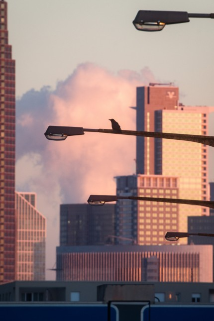 Raubvogel vor Skyline