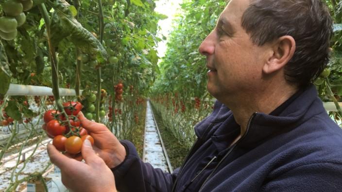 Geothermie statt Heizöl: Auf knapp 20 Hektar Fläche lässt Josef Steiner unter anderem Tomaten wachsen. Der Chef des Gartenbaubetriebes rechnet vor, dass in einem Kilo Tomaten aus dem Glashaus sonst - rein rechnerisch - ein ganzer Liter Öl stecke.