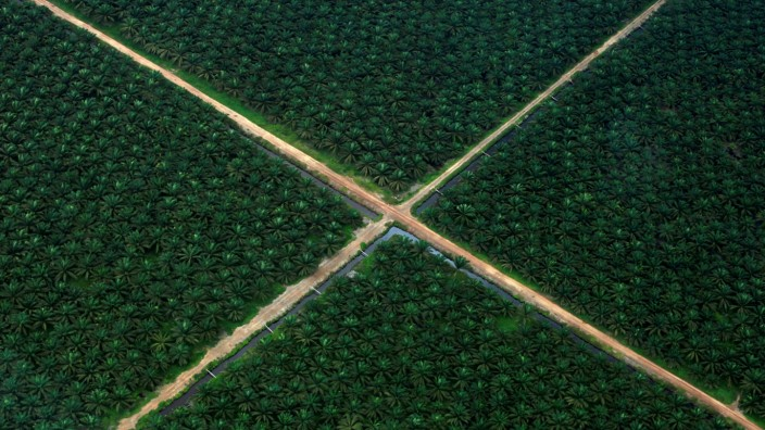 FILE PHOTO: An aerial view shows a palm oil plantation in South Sumatra province