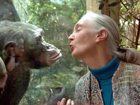 Jane Goodall wird 75