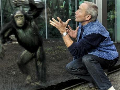Affen Tierpark Hellabrunn