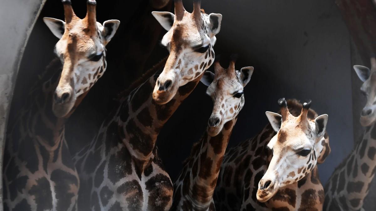 Artenschutz: Forscher wollen allgemein gültiges Register erstellen