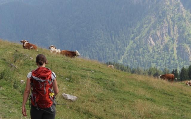 Ein Wanderweg führt vom Fockenstein zur Aueralm oberhalb vom Tegernsee