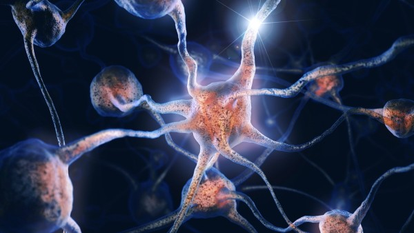 Network of neurons and neural connections, Brain cells, scientific conceptual 3D illustration