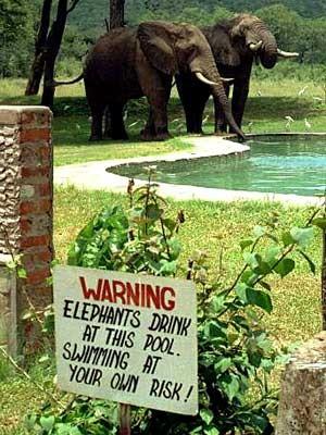 Reise Schilder weltweit Warnung Tiere