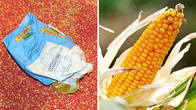 Landwirtschaft: Verbraucher könnten sich zukünftig schwertun, herauszufinden, ob eine Ware genmanipuliert ist oder nicht.