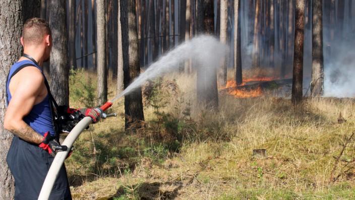 Waldbrand bei Fichtenwalde - Feuerwehr beim Löschen