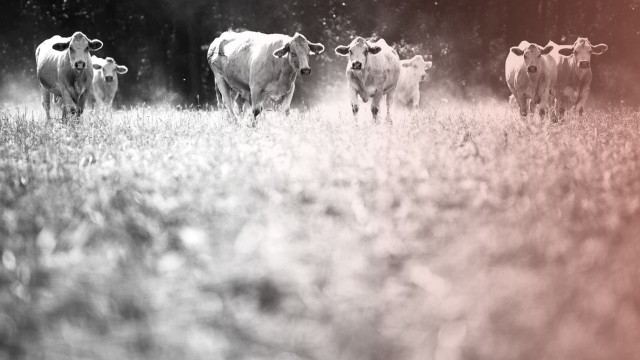 Wegen Dürre: Sächsischer Bauer bringt Tiere nach Thüringen