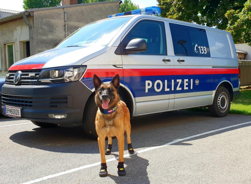 Pfotenschutz bei Wiener Polizeihunden