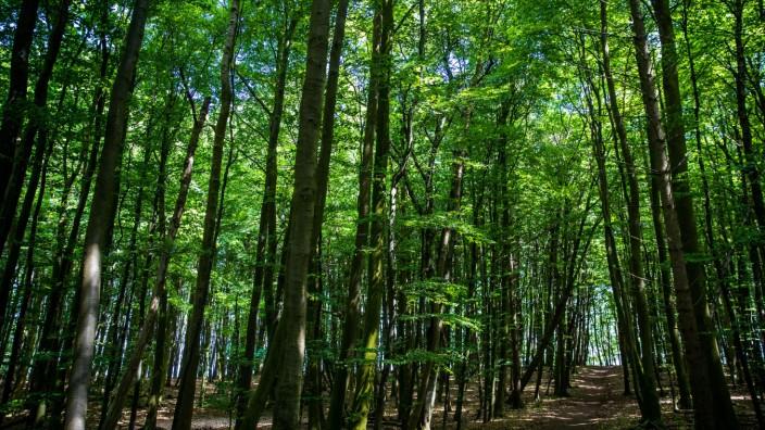 Buchenwälder im Nationalpark Jasmund