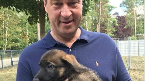 Söder Hund Foto Welpe Twitter