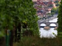 Alte Mainbrücke hinter Weinreben