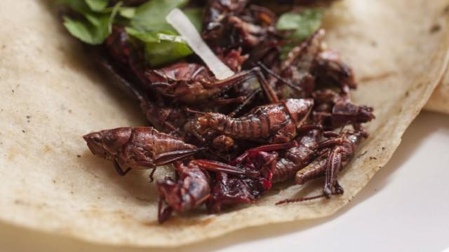 Chapulines or Grasshopper Taco Mercado Benito Juarez Oaxaca City Oaxaca Mexico PUBLICATIONxINxG