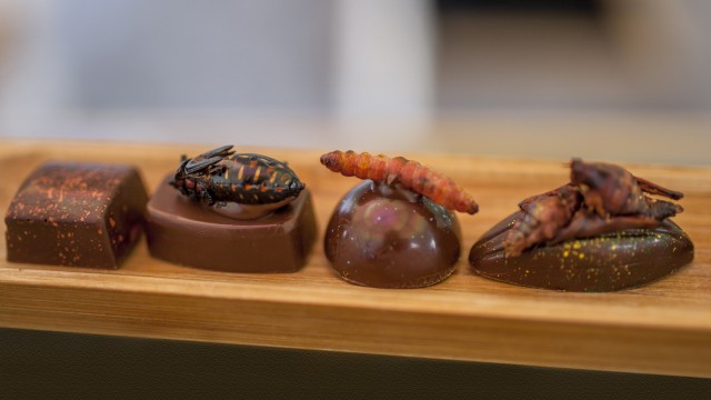 Chocolate with Chinicuil, Chahuis  and chapulines (grasshoppers) edible insects