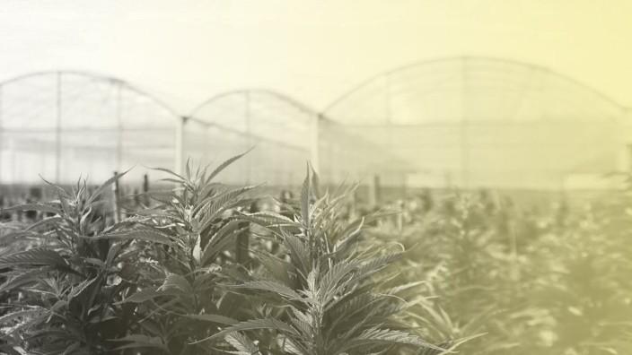 Uruguay verkauft Marihuana in Apotheken