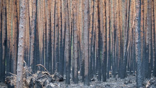 Waldbrände in Brandenburg