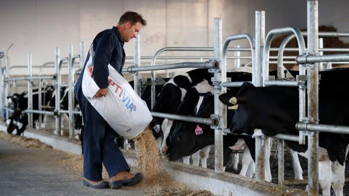 A farmer feeds calves in a barn at a dairy farm in South Mountain