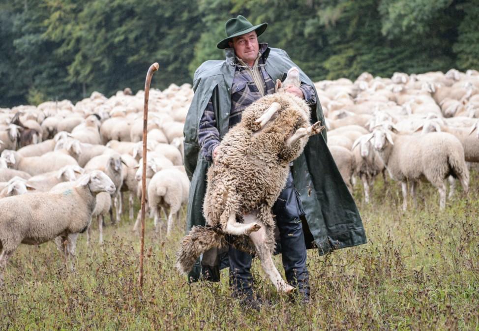 Bouffier übernimmet Lamm-Patenschaft