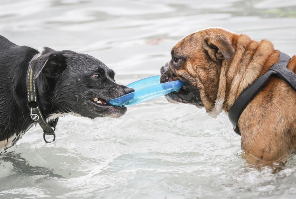 Hundeschwimmen - Saisonende im Freibad