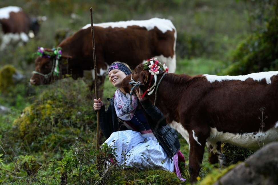 Annual Cattle Drive At Koenigssee Lake