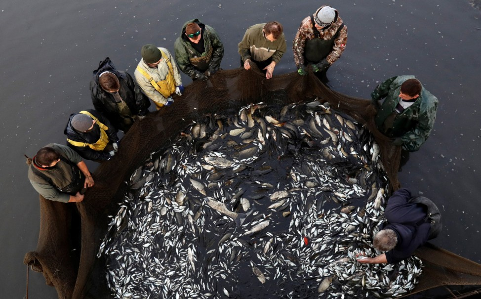 A group of fishermen pull a net containing fish from a pond in Prague