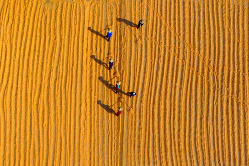 Maisernte in China