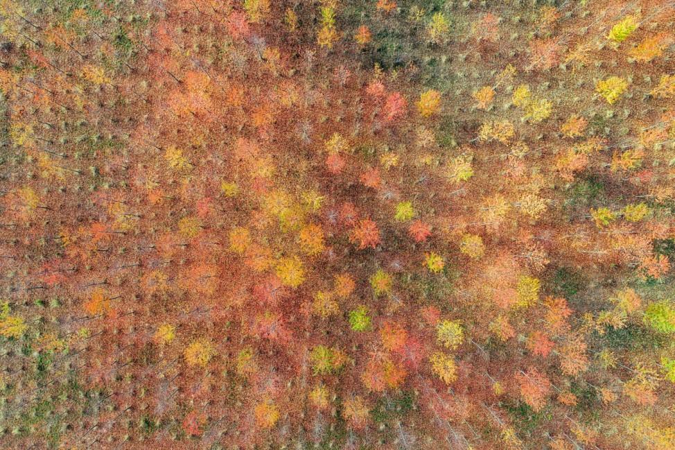 Herbst in der Forstbaumschule