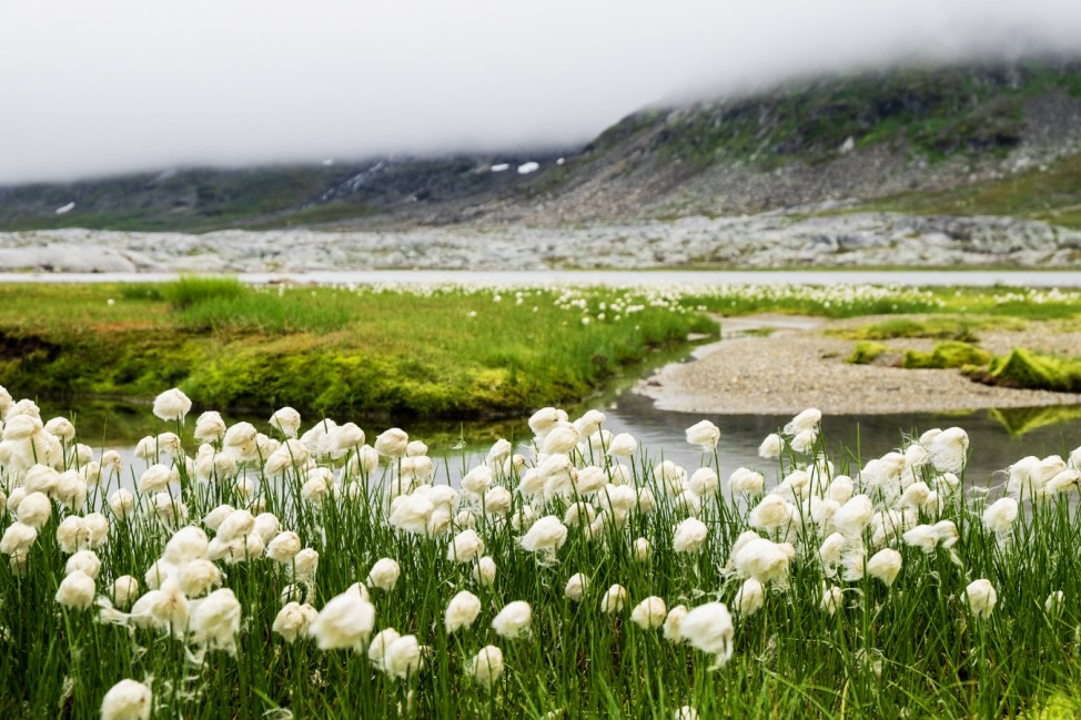 Wandern Wanderung in Lappland Eine Fjellwanderung von Abisko über Kilpisjärvi vorbei am Halti bis nach Norwegen.