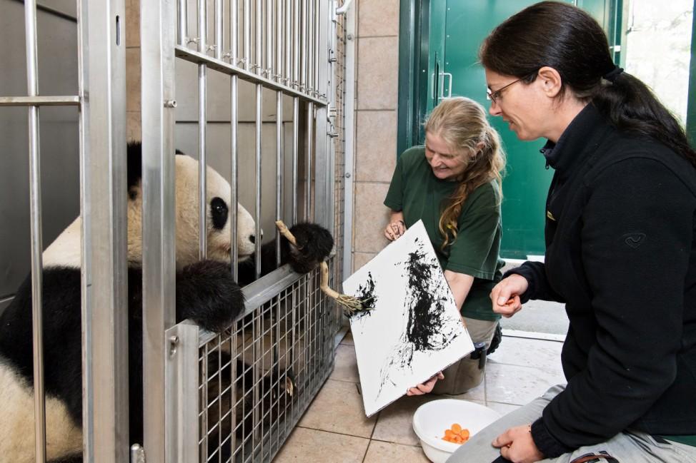 Panda-Weibchen als Malerin