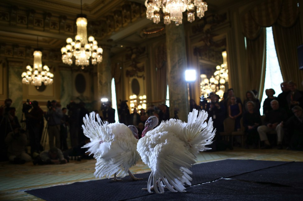 National Thanksgiving Turkeys Meet The Press Before Official Presidential Pardon