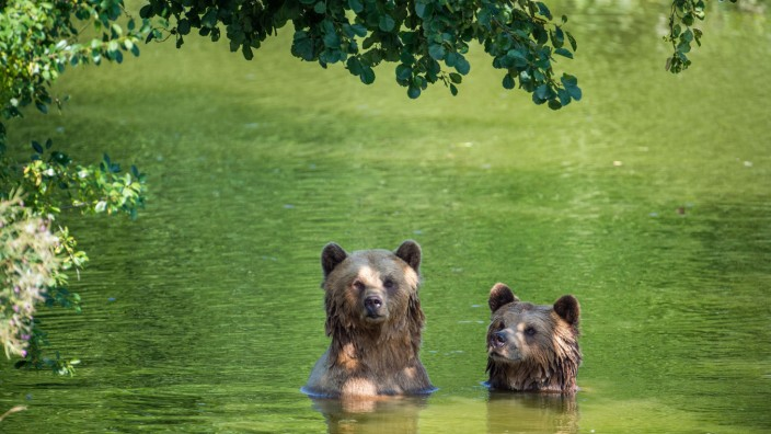 Sommerhitze - Tiere im Wildpark Poing