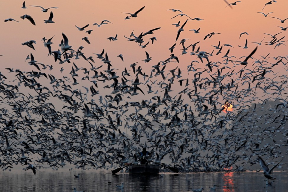 A man rides a boat as seagulls fly over the waters of the river Yamuna early morning in New Delhi