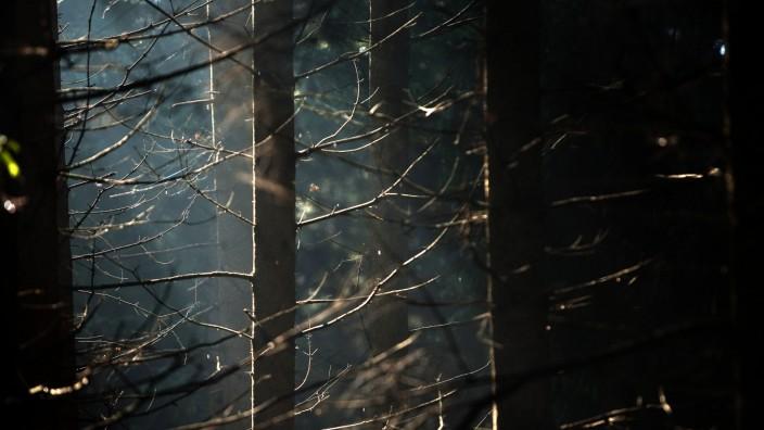Klimawandel und Wald in der Region München, 2012